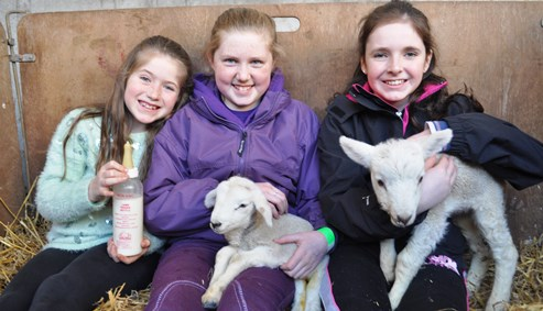 Hundreds flock to Reaseheath lambing weekend in Nantwich