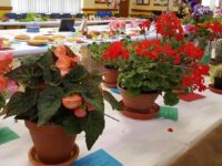 Wistaston Flower and Produce Show 2021 results
