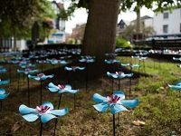 Forget Me Not flowers display in Nantwich in memory of loved ones