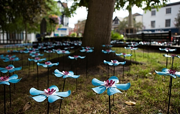Forget Me Not flowers - St mary's church nantwich