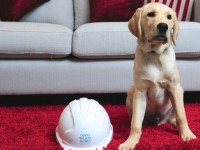 Nantwich house builder sponsors Blind Association puppy