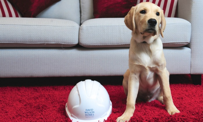 Guide dog for the Blind puppy, Wilson, sponsored by David Wilson Homes