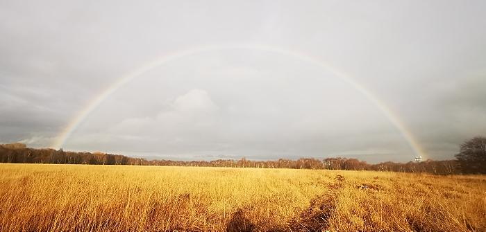 Holcroft Moss - Cheshire. Credit Cheshire Wildlife Trust (1)