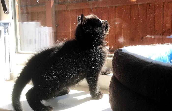 Inky the kitten