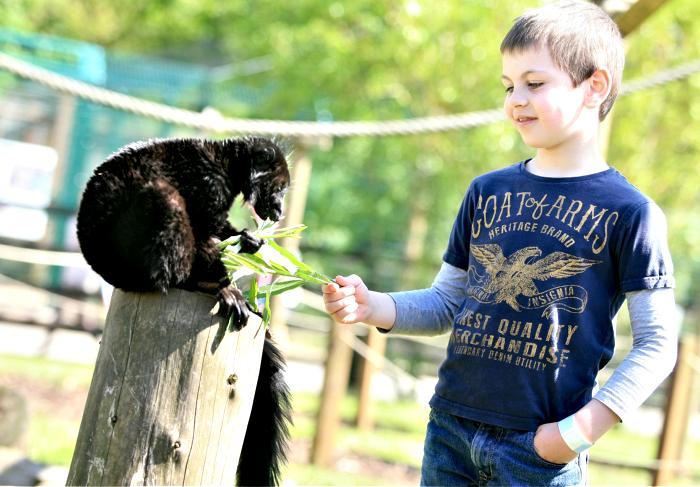 Jaffa the Lemur enjoying his luch with George Darling , 7