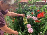 "Nantwich residents hail ""Community Gem"" for brightening neighbourhood"