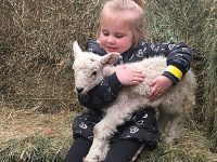 Hundreds flock to lambing weekend at Reaseheath College in Nantwich