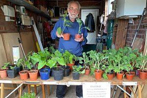Wistaston Conservation Group plant sale raises funds