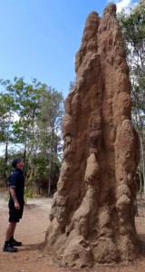 Jonathan White looking at a termite mound in Northern Territory Australia