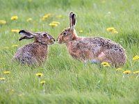 Nantwich photographers urged to enter Cheshire Wildlife Trust calendar contest