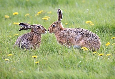 Nantwich photographers urged to enter Cheshire Wildlife Trust calendar contest
