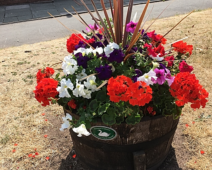 Kings Drive flower pot - photo by David Clews