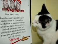 RSPCA staff in Nantwich seek new home for abandoned kittens