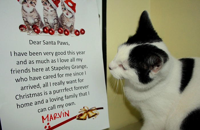 Letter from Marvin, abandoned kitten at RSPCA cattery