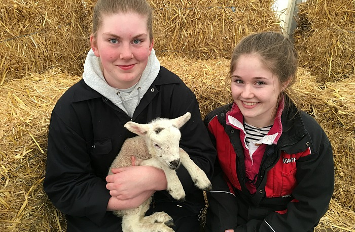 Level 3 Subsidiary diploma in Agriculture students Sophie Kirk and Lauren Bennett help out in the lambing sheds