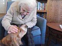 Every dog has its day in Richmond Village Nantwich scheme!