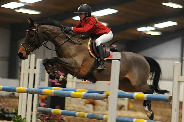 Madison Heath Cisco Bay II - South View Equestrian Centre
