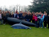 Whale rescued at Reaseheath College in Nantwich!