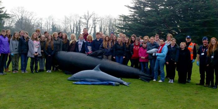 Marine mammal students in beached whale emergency