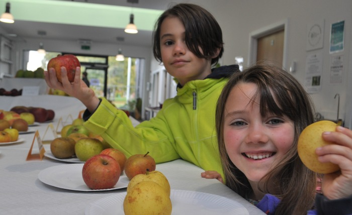 apple - max-and-maya-adams-from-shrewsbury-with-show-apples