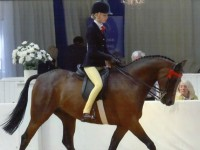 Brine Leas youngsters to compete at Horse of the Year Show