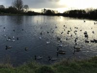 Hunt for man who exposed himself to kids at Nantwich Lake