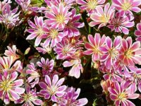 Nantwich Museum to stage Plant Sale on May 29