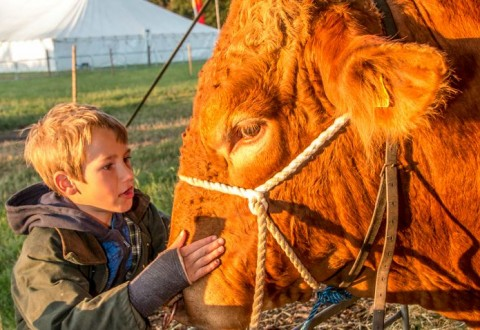 Nantwich Show shines once more as thousands enjoy sunshine event