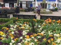 Appeal for Nantwich volunteers ahead of Britain in Bloom judging