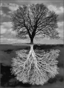 negative-roots-camera-club