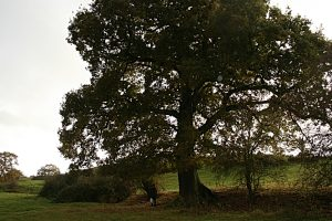 Cheshire Wildlife Trust wins extra funding in HS2 Phase 2a battle