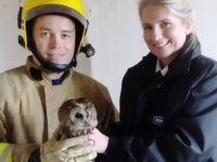RSPCA staff in Nantwich treat owl trapped in house after falling down chimney