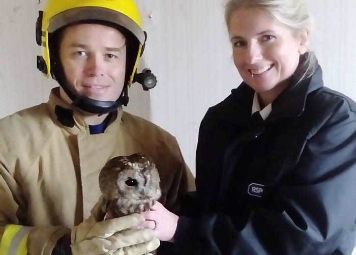 owl-stuck-in-chimney-treated-at-stapeley-grange