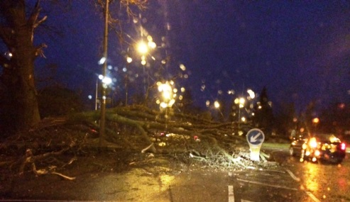 Fallen trees and flooding but South Cheshire escapes Storm Aileen