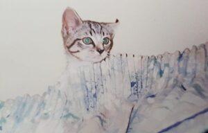 Phoebe as a kitten - cat