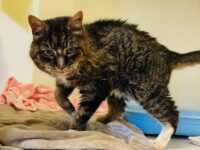 Cat found in Nantwich reunited with owner – 20 years after going missing!