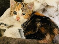 RSPCA Stapeley Grange cared for more than 30 cats last Christmas Day