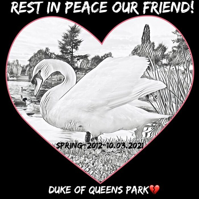 REST IN PEACE OUR FRIEND - Duke the Swan