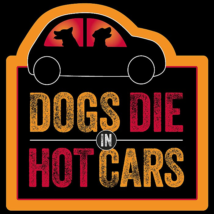 Small Cars Good For Dogs Uk
