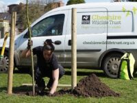 Cheshire Wildlife Trust to recruit for seven new positions