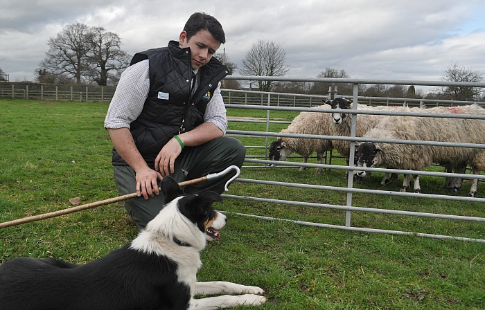 Reaseheath agriculture lecturer Dan Henderson and his sheepdog Floss demonstrate sheep penning