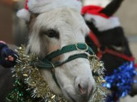 Festive fun lined up at Reaseheath College zoo near Nantwich