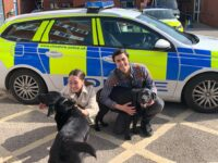 Stolen Nantwich dogs found in house in Stoke-on-Trent