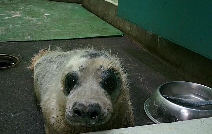 Seals - Jamie