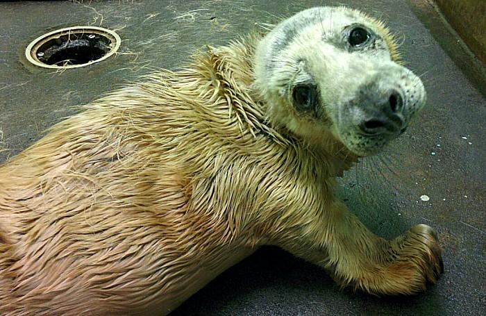 Seals - Jon Snow