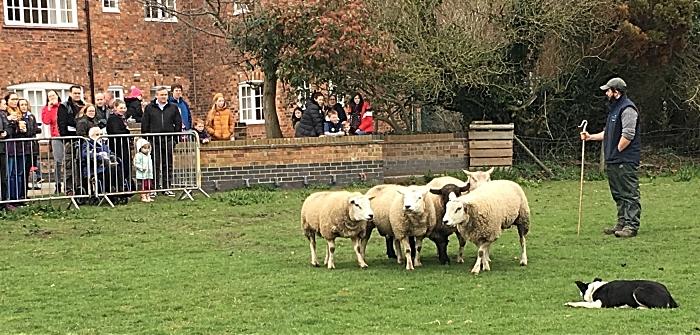 Shepherd Dan Henderson and Floss demonstrate sheepdog handling (1)