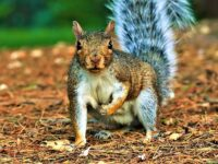 South Cheshire photographers capture stunning wildlife images in Queens Park