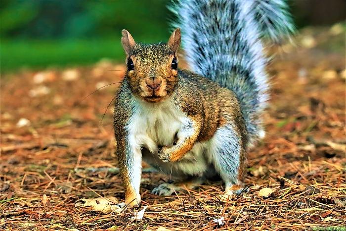 Squirrel - photo by Daniel Bain (1)