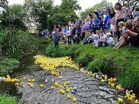 825 plastic ducks race at annual Wistaston community event