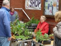 Nantwich Museum Plant and Book Sale set for June 3